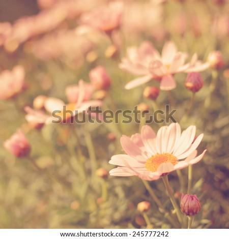 flower meadow vintage retro - stock photo