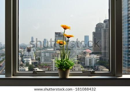 flower near window office building - stock photo
