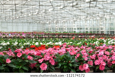 Flower nursery in Europe. Greenhouse with large variety of cultivated flowers. - stock photo
