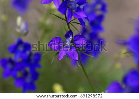 Spur Stock Images Royalty Free Images Amp Vectors