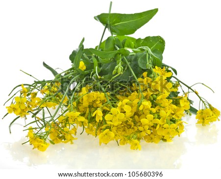 Flower of a rapeseed, Rape blossoms ,Canola or Oilseed Rapeseed, isolated  on white background - stock photo