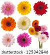 Flower of gerber daisy collection isolated on white - stock photo