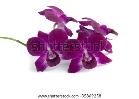 Flower of orchid