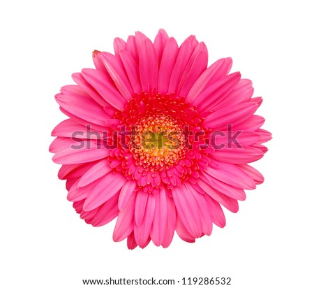 Flower of pink gerber isolated on white - stock photo