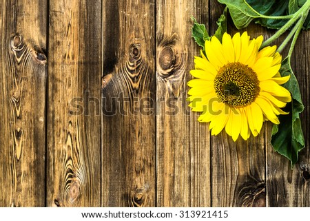 Flower Of Sunflower In Yellow Color On Rustic Wood Background Flowers Backgrounds
