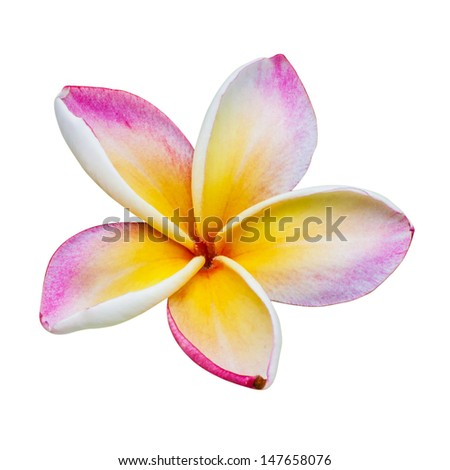 Flower of temple in Thailand Asia - stock photo
