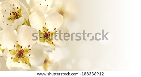 flower of the pear tree,