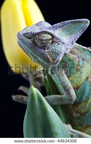 Flower on chameleon - stock photo