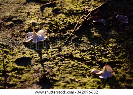 Flower on moss - stock photo