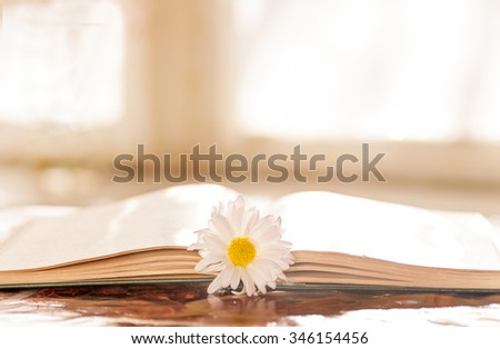 flower on the book in front of the window in the morning - stock photo