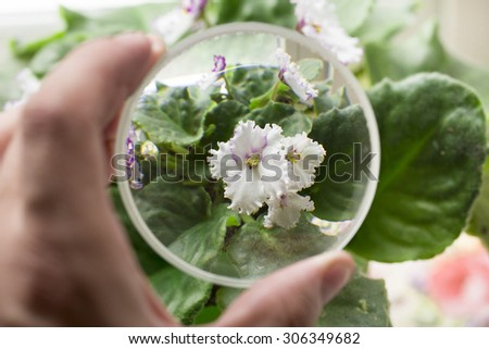 flower on the white background - stock photo