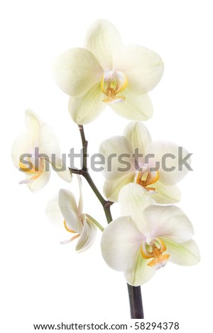 flower on the white isolated background - stock photo
