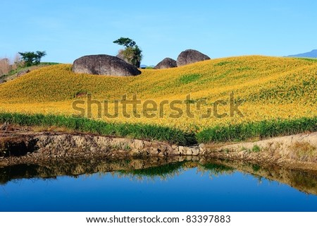FLOWER PARK IN TAIWAN - stock photo