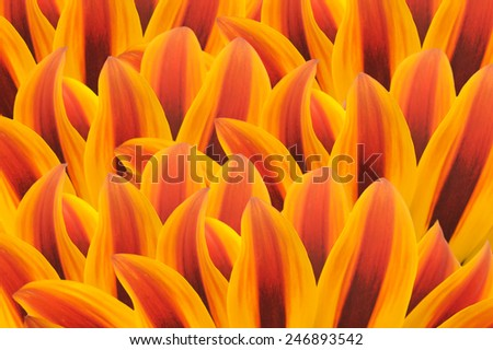 Flower Petal Background - stock photo