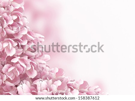 flower petals isolated on white background - stock photo