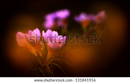 Flower photo of a beautiful flower - stock photo