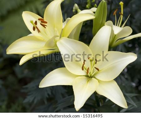 flower - plants in green summer garden - stock photo