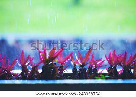 flower plants under strong rain at summer day - stock photo