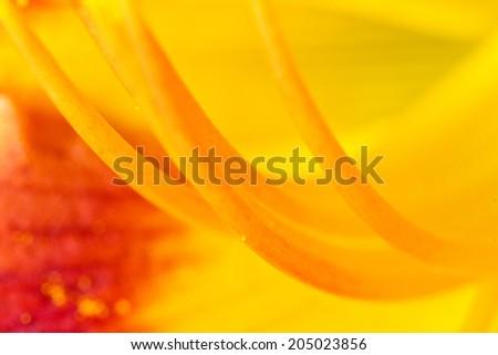 Flower pollen macro background - stock photo