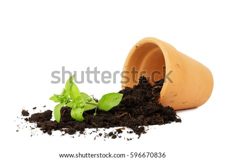 Flower Pot Stock Images RoyaltyFree Images Vectors Shutterstock