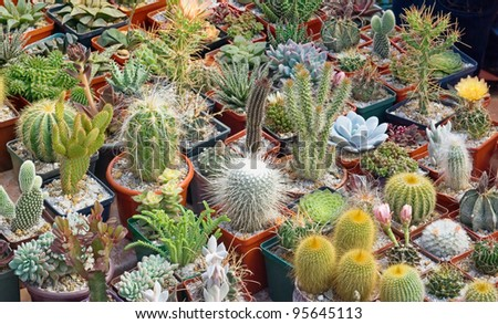 Flower pot with variety of succulents in the plant store - stock photo