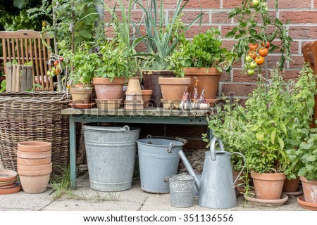 Flower pots with herbs and vegetables / herbs / Flowerpots
