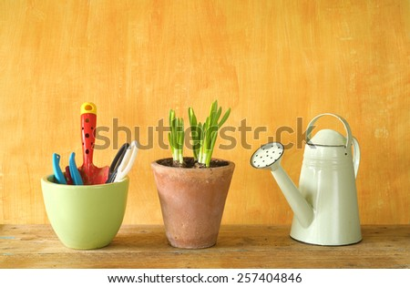flower seedlings and gardening utensils, springtime, free copy space - stock photo