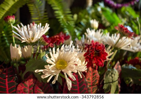 Flower set - chamomiles, asters - stock photo