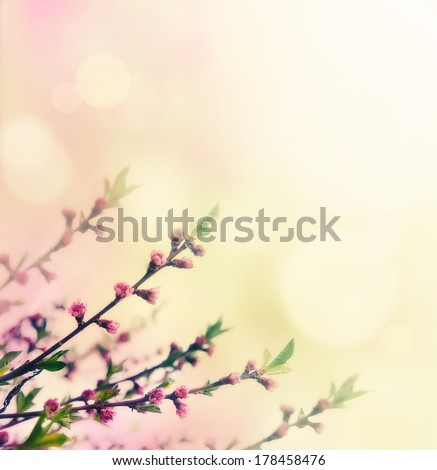 Flower spring background. Floral buds on pink. Spring bokeh - stock photo