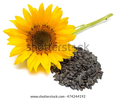 Flower. Sunflower isolated on white background. Seeds and oil. Flat lay, top view