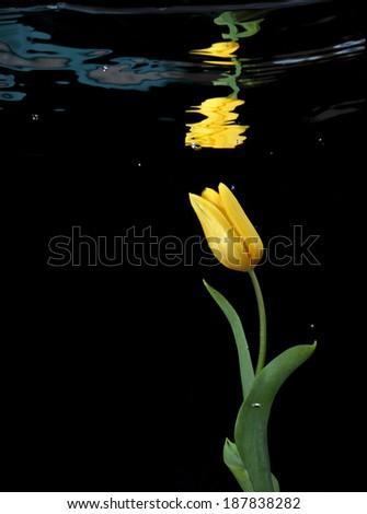 Flower underwater - stock photo