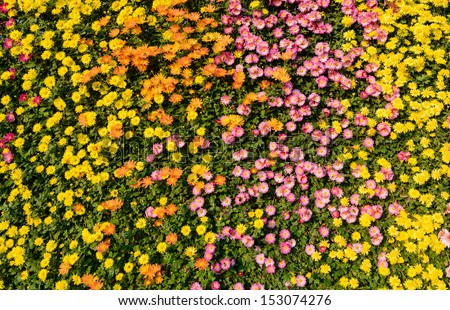Flower wall background - stock photo