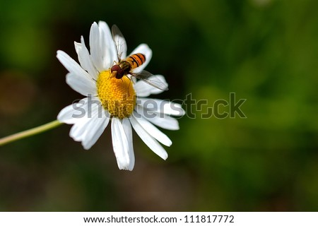Flower with bee - stock photo