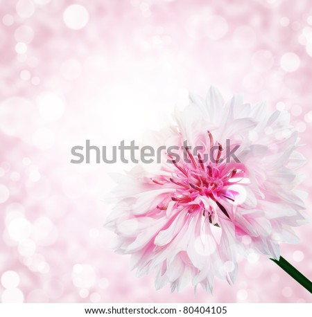 flower with  bokeh summer background - stock photo