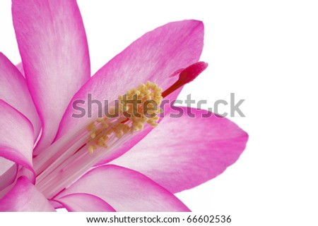 Flower with pistil and stamen - stock photo