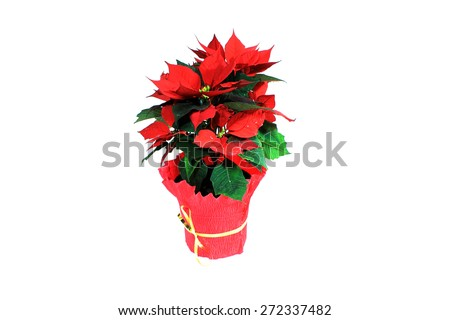 Flower with red leaves on a white background. Isolated object.