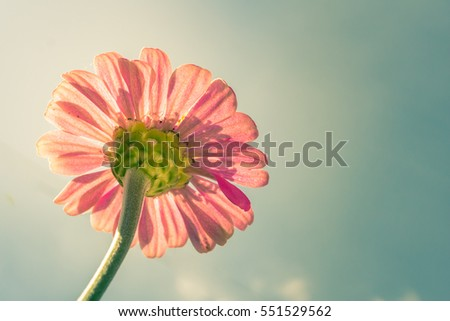 flower with sky in vintage color tone