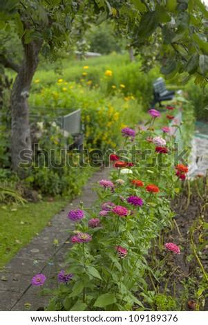 flowerbed along a garden path  in a cottage garden. - stock photo