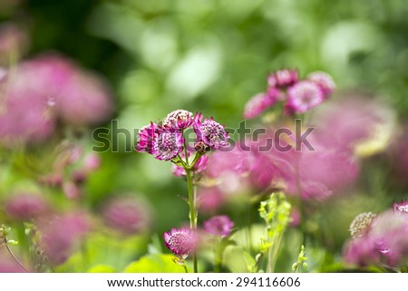 Flowerbed closeup with many bright pink summer flowers - stock photo