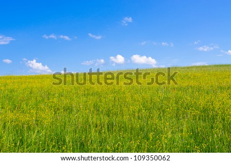 Flowered meadow and blue sky - stock photo