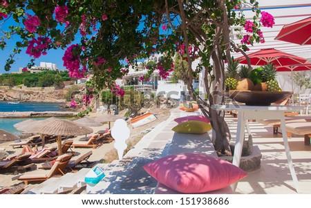 Flowering bougainvillea on the beach against the Mediterranean Sea - stock photo
