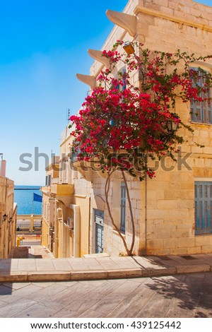 Flowering bougainvilleat in the town of Mediterranean Sea - stock photo