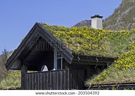 Flowering dandelion meadow on the roof of a residential building in Norway