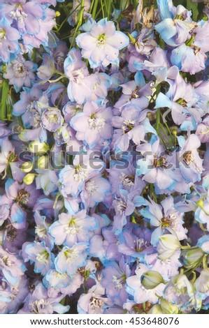 Flowering delphiniums background, shallow DOF - stock photo