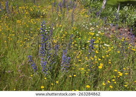 Flowering meadow flowers in summer - stock photo