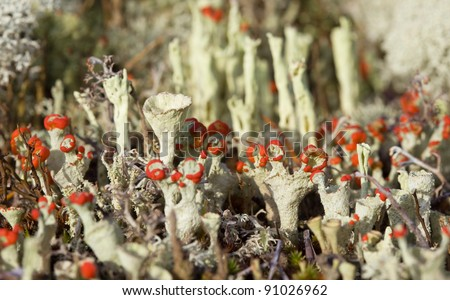flowering moss sunlight under natural conditions - stock photo