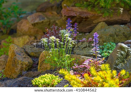 Flowering plants in spring