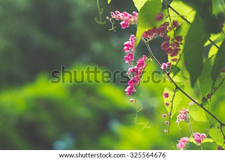 Flowering plants in the pea family - stock photo