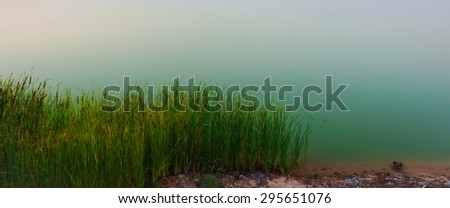 Flowering reed plants with calm lake - stock photo