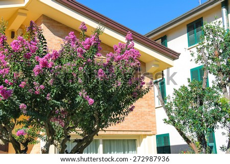 Flowering tree near the modern cottage on a sunny day - stock photo
